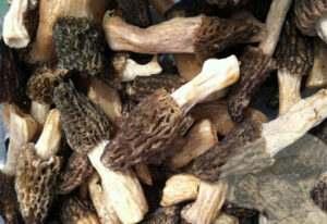 guchiyyan-dried-mushroom-black-morels