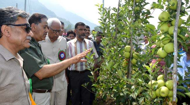 governor-being-briefed-by-vc-about-the-high-density-apple-orchard